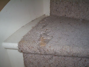 Another worn carpet runner on stairs, before repairs.